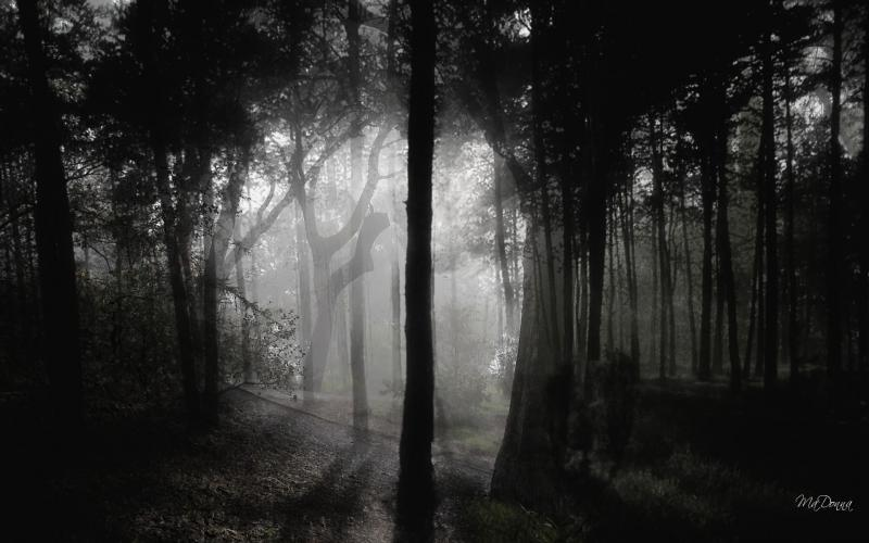 Dark Fall Android Wallpaper Hd Deep In The Woods Wallpaper Download Free 49548