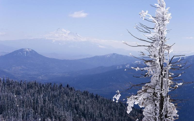 HD Icy Frozen Tree Wallpaper Download Free 56403