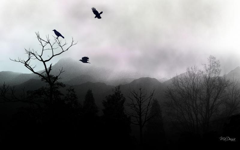 Fall Mist Wallpaper Hd Ravens Rest Wallpaper Download Free 51209