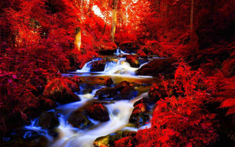 Free Fall Wallpaper For Computer Hd Red Autumn Forest Stream Wallpaper Download Free 59550