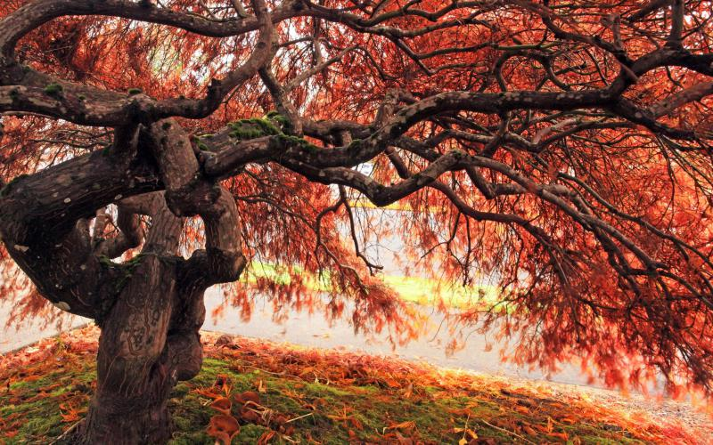 Cute Japanese Animals Wallpaper Hd Eerie Gnarled Tree In Autumn Wallpaper Download Free