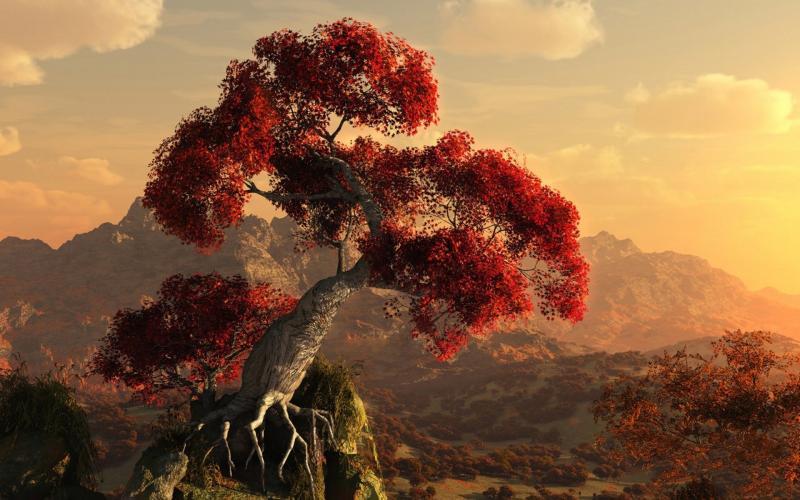 Good Morning Cute Wallpaper Hd Hd Exotic Tree Wallpaper Download Free 54129