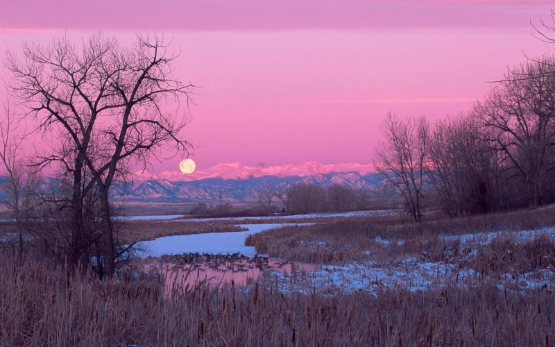 Cute Animated Moving Wallpapers For Desktop Hd Swamp In Winter Under A Moon Wallpaper Download Free