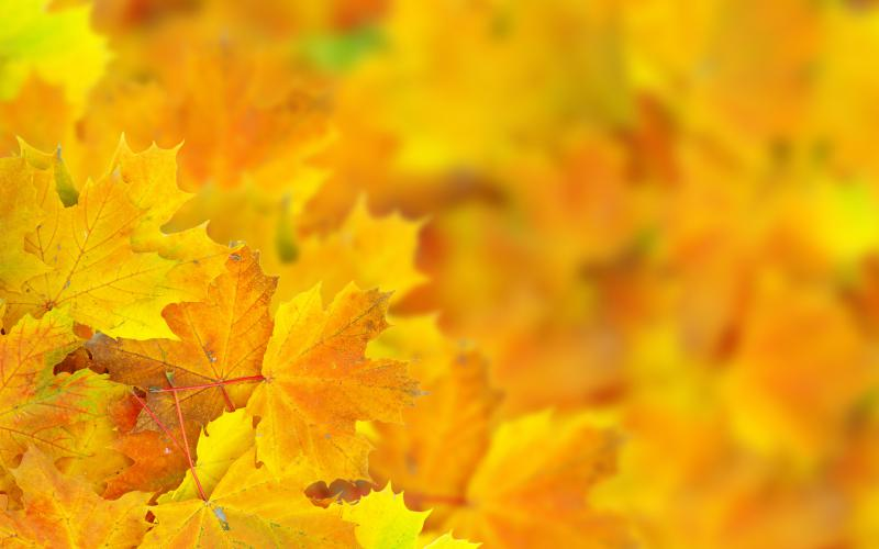 Cute Fall Leaves Wallpaper Hd Yellow Collage Wallpaper Download Free 57740