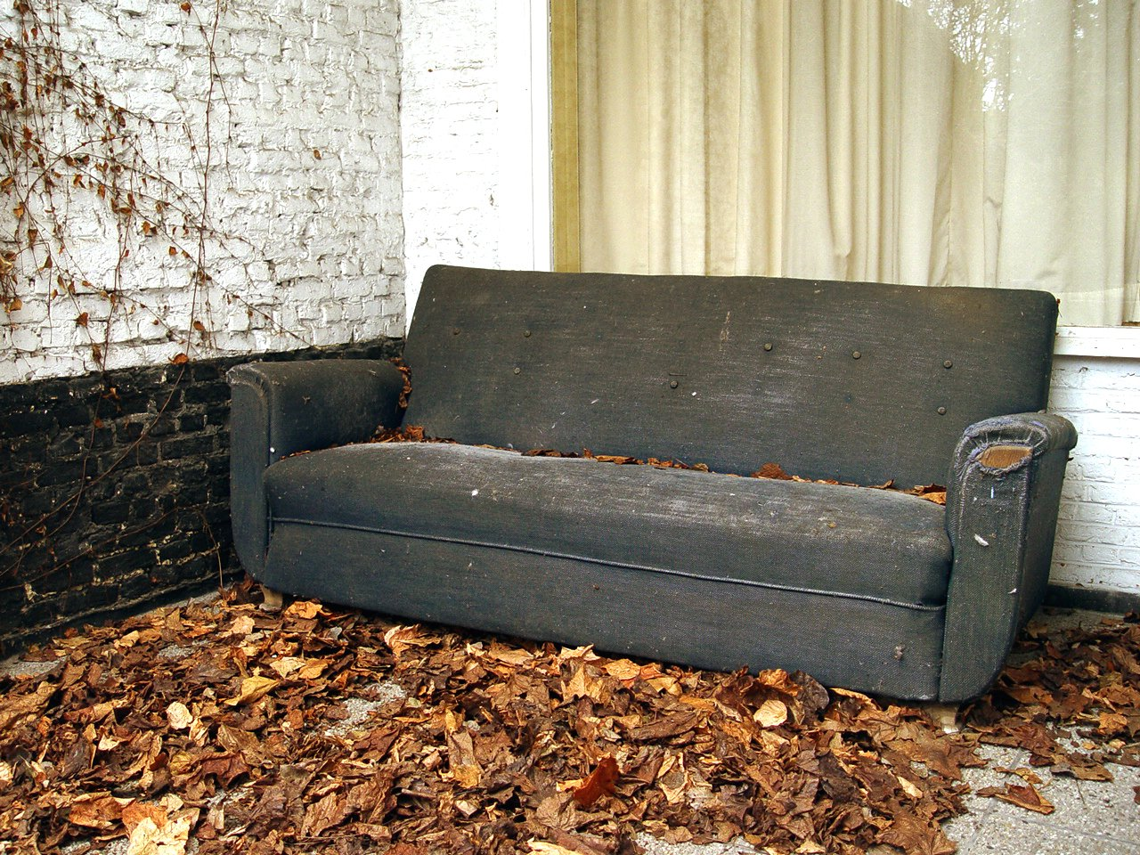 leather sofa and bed bugs newton rolled arm chaise convertible reviews old photo files 1479183 freeimages