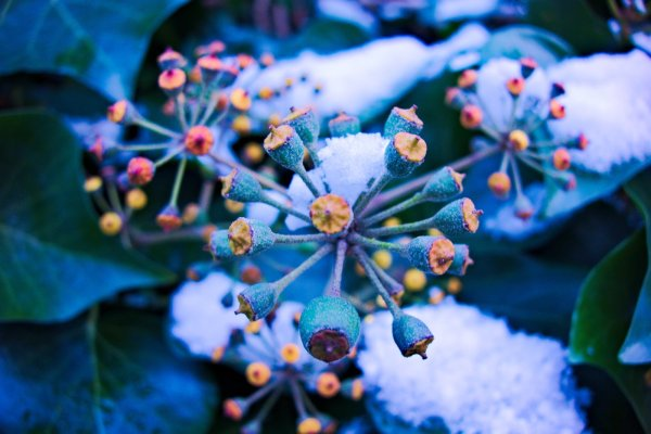 Free Winter Flower Stock