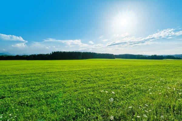 free green field landscape stock
