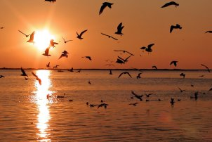 Zwarte Seagulls