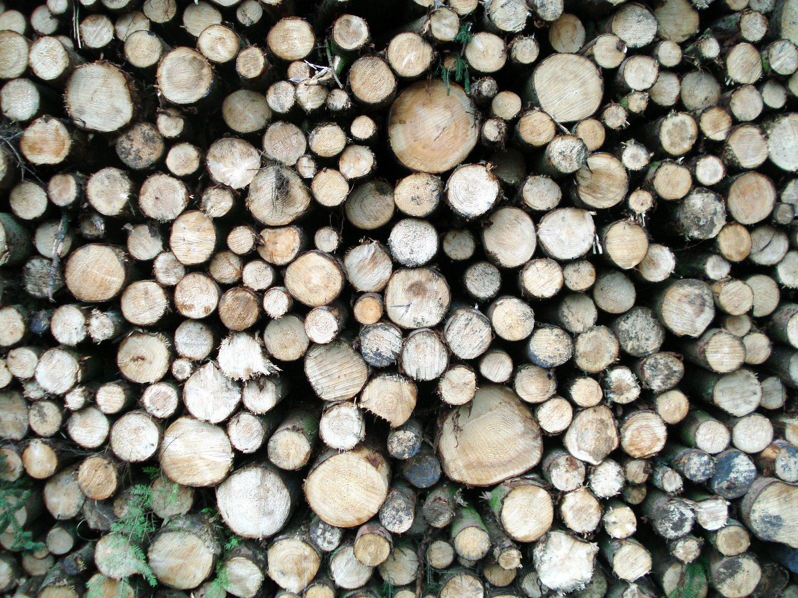 free tree logs i