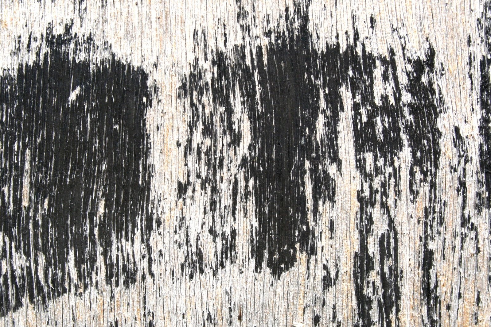 Free Wood Texture Decay Stock Photo
