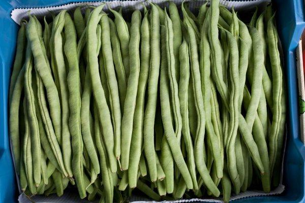 Free Common Beans Stock