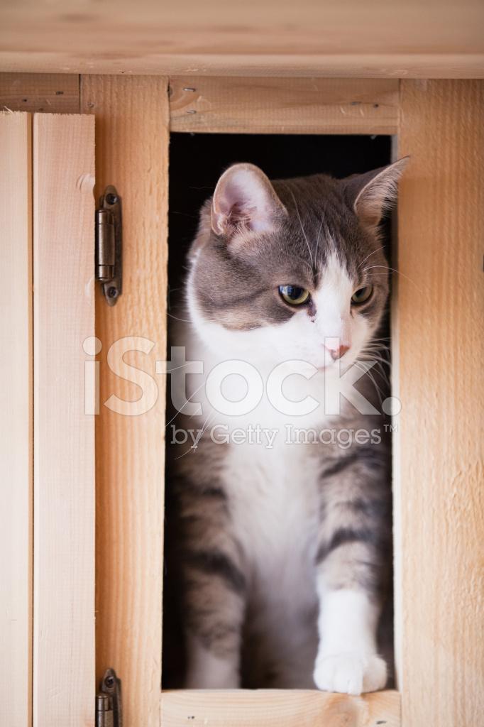 cats in the kitchen soapstone countertops 在厨房里的猫照片素材 freeimages com premium stock photo of 在厨房里的猫