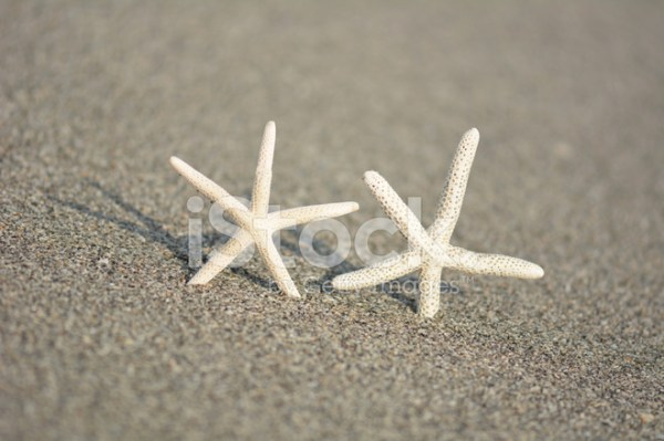 Happy Together Starfish Stock Photos FreeImagescom