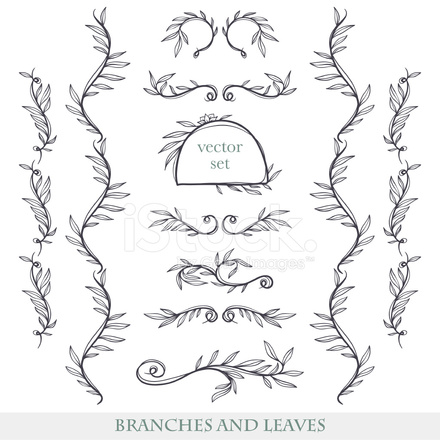 Elegant Floral Elements With Branches and Stock Vector