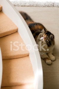 Cat Laying Behind Cat's Stairway stock photos - FreeImages.com