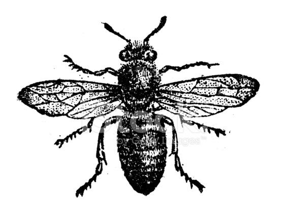 Antique Illustration of Worker Bee Stock Vector