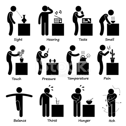 Human Senses Stick Figure Pictogram Icons Stock Vector