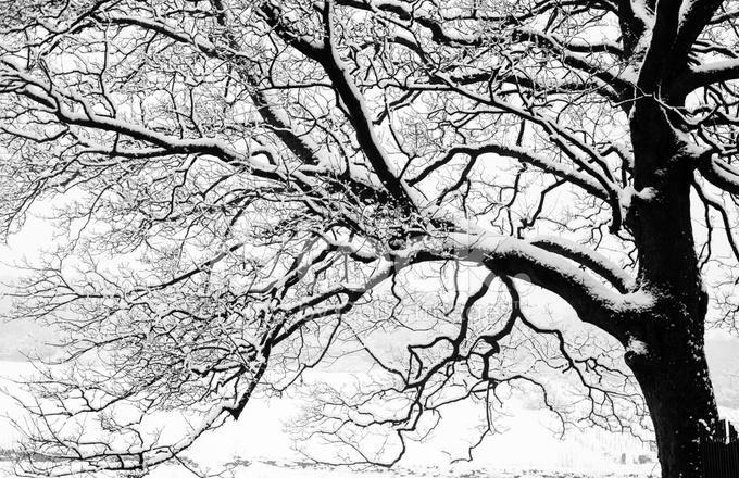 Frozen Nevosi Alberi E Rami Nel Paesaggio Invernale Di