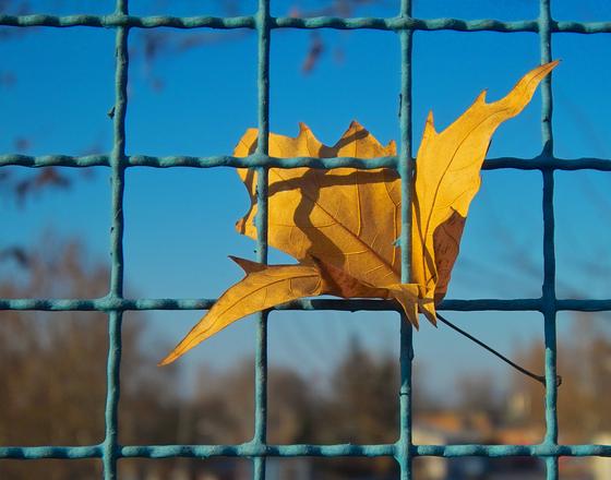 prisoned leaf