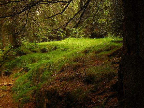 Del bosque I