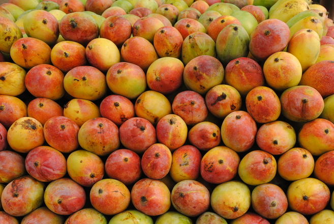 Mango - the king of fruits