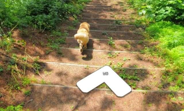 qaCapKCZkqOer6SX - 韓國攝影師一路被呆狗尾隨,竟拍出「超激萌街景照」,網友表示「夭壽可愛!」