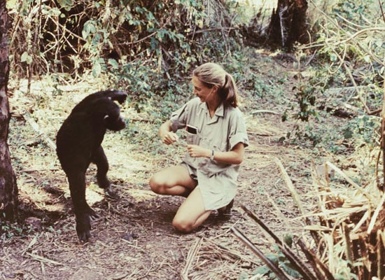 """Jane Goodall in her youth. """"There are animals that have survived extinction and battered areas that have returned to support nature. You can do amazing things"""" / צילום: Gettyimages / Anadolu Agency"""