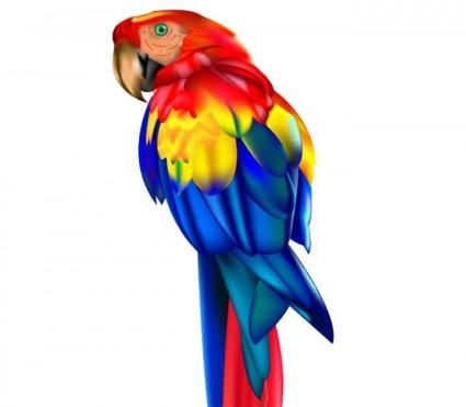 Burung Beo Vektorvektor Hewanvektor Gratis Download Gratis