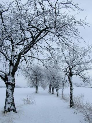Musim Dingin Salju Pohonmusim Dingingratis Foto Download