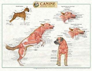Canine Muscular Anatomy Laminated Wallchart [Poster]