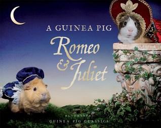 A Guinea Pig Romeo  Juliet