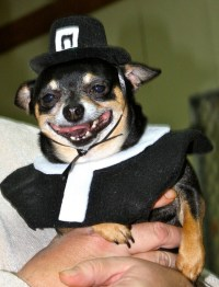 15 Animals Dressed for Thanksgiving - He's Seen Some ...