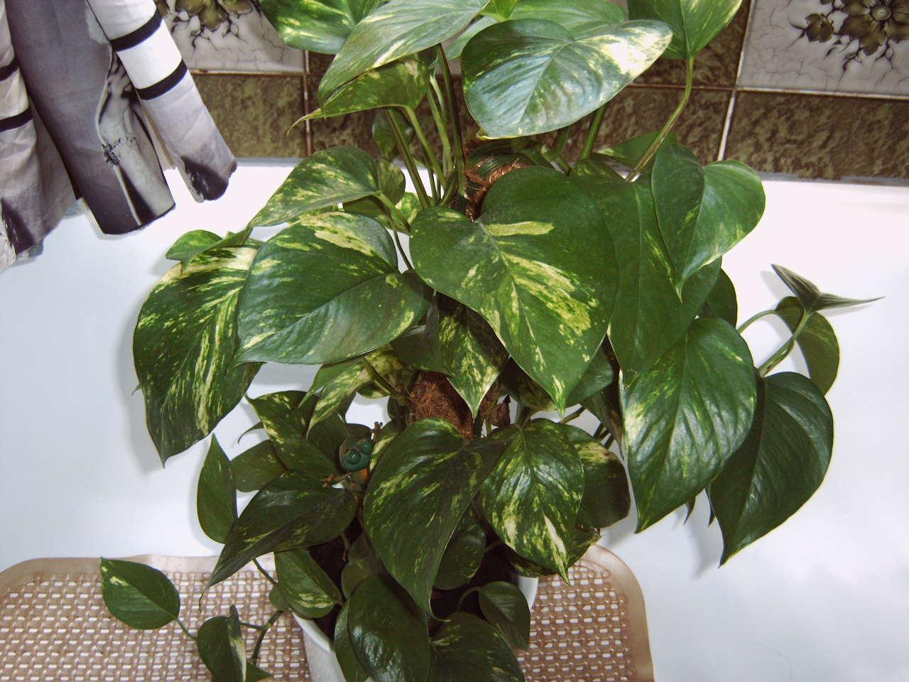 Kennt jemand diese Pflanze und ist sie fr Katzen giftig Garten Name der Pflanze