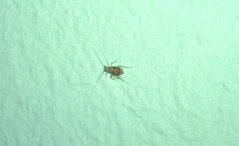 Kleine Insekten im Schlafzimmer ca 03 mm gro