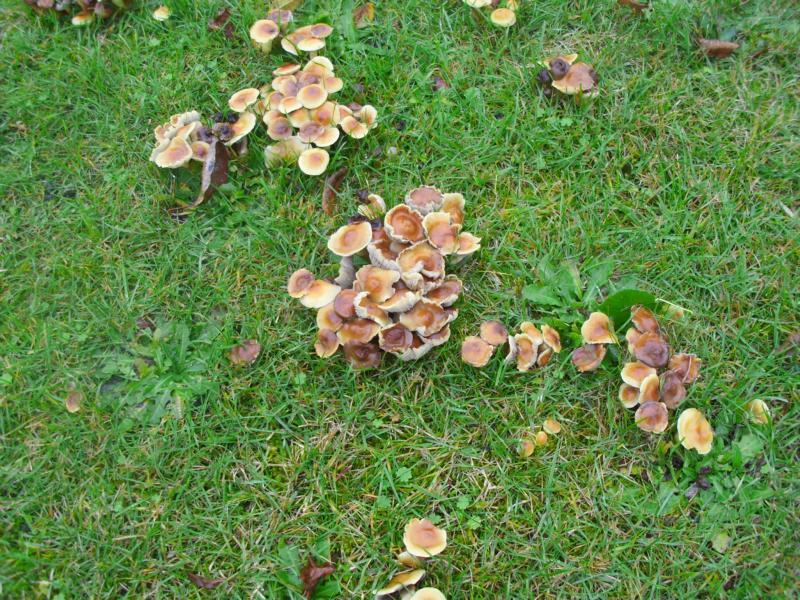Wie Bekämpfe Ich Diese Pilze Um Den Alten Baumstumpf