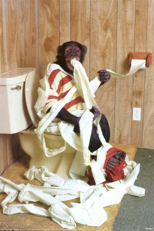 Suche Affe auf WC  Toilette Poster Tiere Bilder