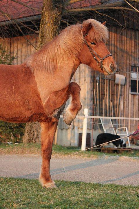 warum werden Pferde geschoren? (schneiden, Hals, Fell)