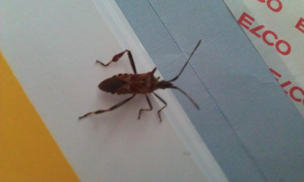 Was ist das fr ein Insekt das ich fotografiert habe