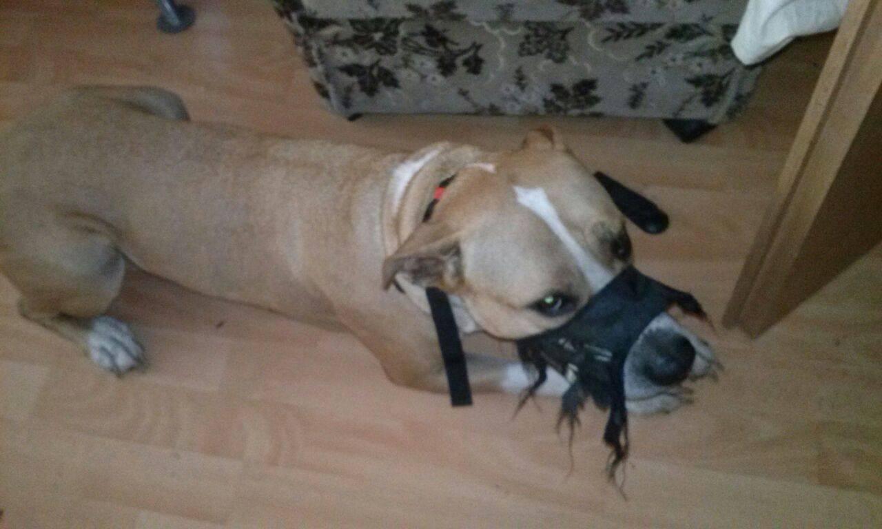 Was Soll Ich Tun Wenn Mein Hund Alleine Ist Zerstört Er
