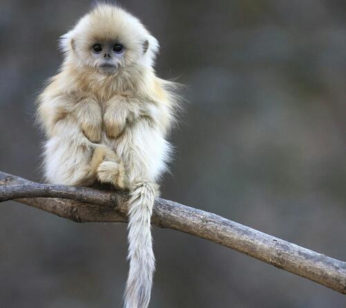 Cute Baby Monkeys Wallpaper Welcher Affe Ist Das Tiere Affen