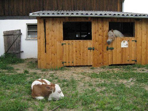 Wie teuer ist der Bau von einem Pferdestall Pferde