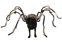 DIY Spider Dog Costume