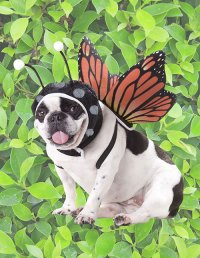 Insect & Bug Costumes for Kids & Adults ...