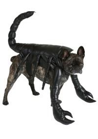 Scorpion Dog Costume   www.imgkid.com - The Image Kid Has It!