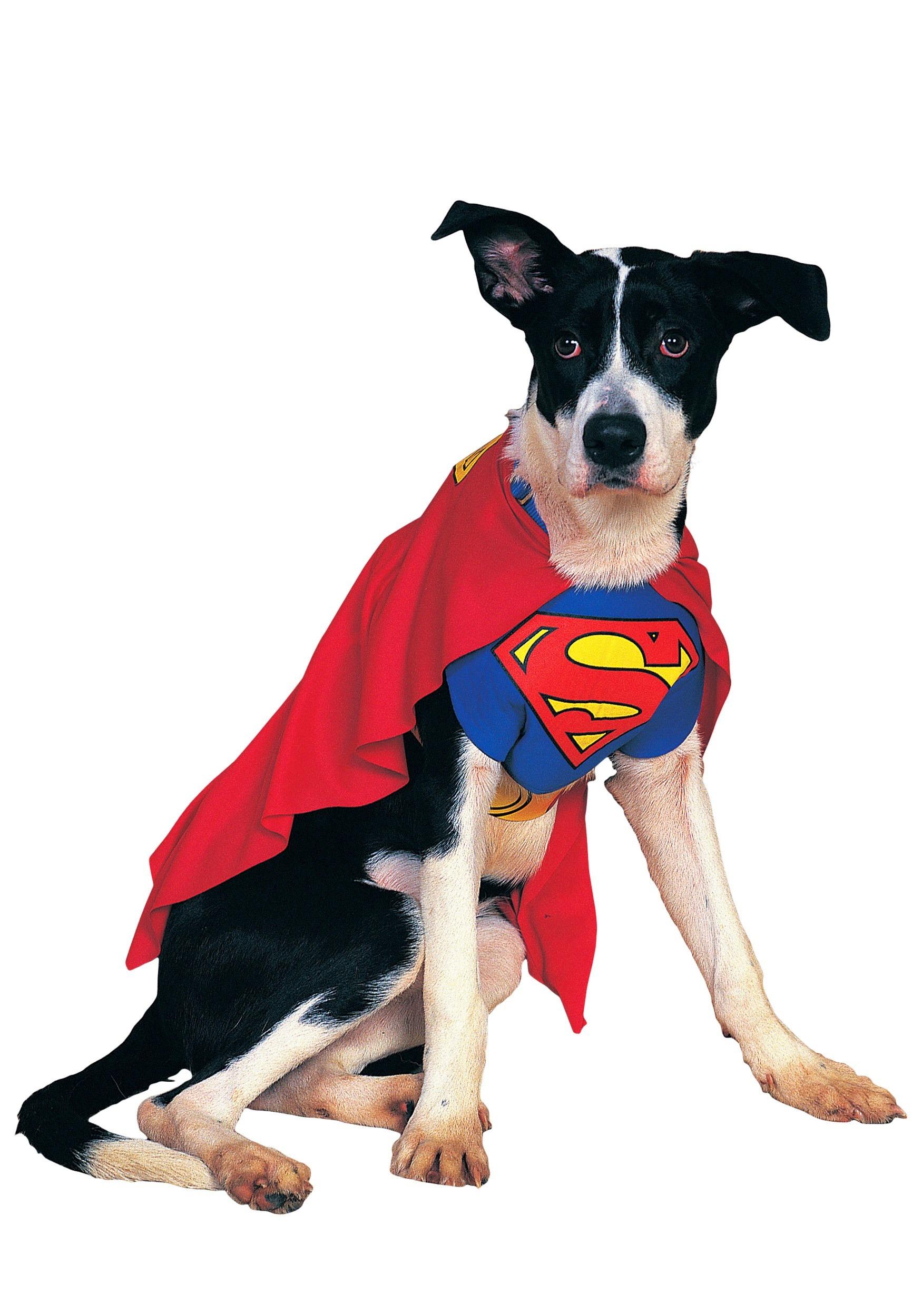 Superman Dog Costume