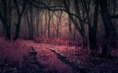 forest purple heaven nature gloomy wallpapers dark pink hd forests darkness thicket twilight autumn pathway grass 4k resolution backgrounds 1440p
