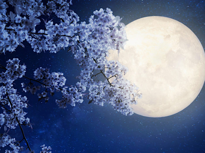 This is what tonights Flower Moon means for us all