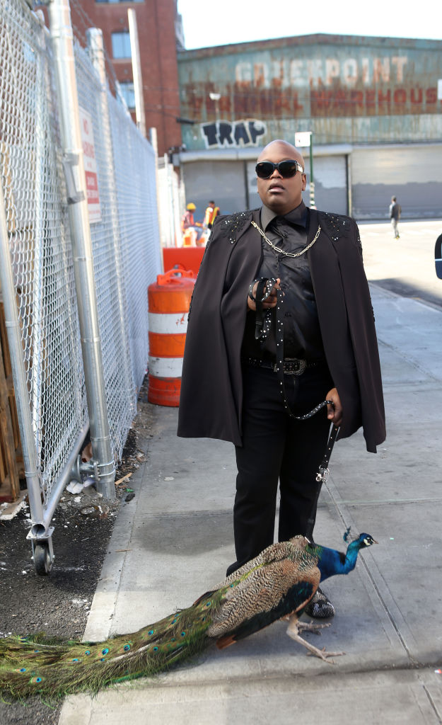 Yes That Is Tituss Burgess Casually Walking A Peacock On