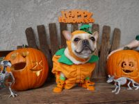 Dog Halloween costumes: 11 fun ideas for dressing up your pup