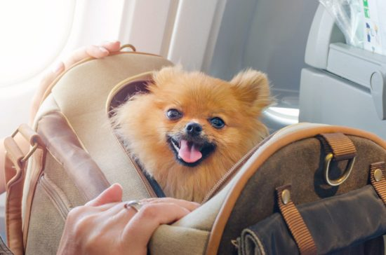 This airline banned puppies and kittens as emotional support animals—but don't get mad yet